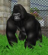 Western-lowland-gorilla-zoo-empire