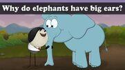 Why Do Elephants Have Big Ears