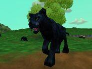 Zt2-blackleopard