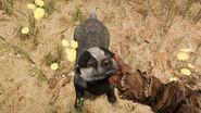 Far Cry Primal Badger