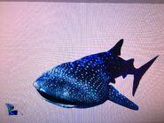 Jewel meets Whale Shark