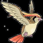 Pidgeot-0