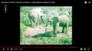 The Elephant Is Not the Tallest Animal