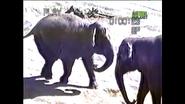 UTAUC Asian Elephants