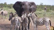 Are You an Elephant a Buffalo or a Warthog