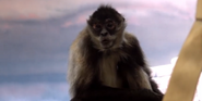 Milwaukee County Zoo Spider Monkey