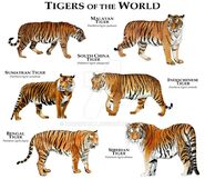 Tigers of the World by rogerdhall