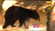 Dickerson Park Zoo Bear