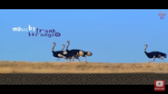 Elephant Tales Ostriches