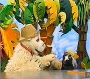 Ernie the Mongoose crying in Jim Henson's Animal Show: Mongoose & Secretary Bird