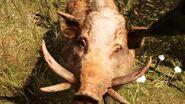 Far Cry Primal Boar