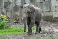 Photo-detail-asia-asian-elephants-4