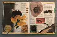 DK First Animal Encyclopedia (59)
