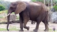 Disney's Animal Kingdom Elephant