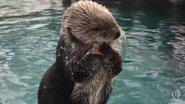 Orgeon Zoo Sea Ottter
