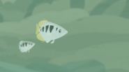Archerfish (Wild Kratts)