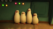Penguins in lab