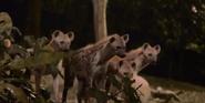 Singapore Zoo Spotted Hyenas