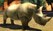South-central-black-rhinoceros-zootycoon3