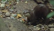 Bronyx Zoo TV Series Otter