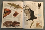 DK Encyclopedia Of Animals (163)