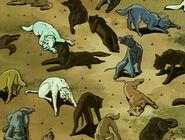 Ginga dogs