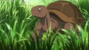 JEL Giant Tortoise