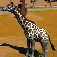 Nubian-giraffe-zootycoon3