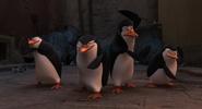Penguins fight