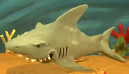 Ribbits-riddles-shark