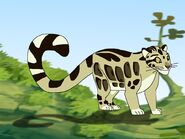Rileys Adventures Clouded Leopard