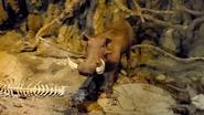 Rolling Hills Zoo Warthog