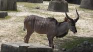MLWCECZ Kudu