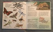 My First Book of Animals from A to Z (12)