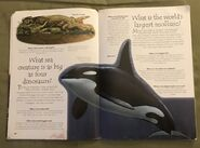 Sea Creatures (Over 100 Questions and Answers to Things You Want to Know) (9)