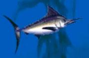Swordfish-jumpstart-preschool