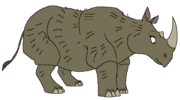 Destiny the Sumatran Rhino