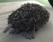 Edward the Echidna