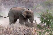 Elephant and Rhino Interact