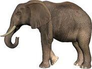 Elephants PNG