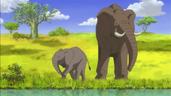 JEL Elephants