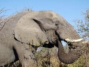 Living With Elephants