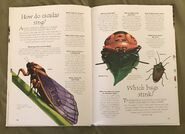 Creepy Crawlies (Over 100 Questions and Answers to Things You Want to Know) (7)