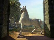 Stallion Donkey