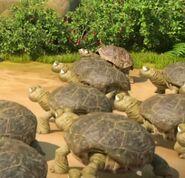 TheJungleBunch-Turtles