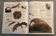 DK Encyclopedia Of Animals (37)