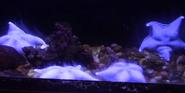 Indianapolis Zoo Starfish