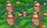 Singing Gorillas