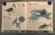 Ocean Life Dictionary (3)
