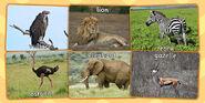 Vultures Lion Zebra Ostriches Elephant Antelope